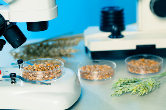Microbiological Testing for Food Quality