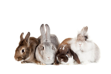 Group of different breeds rabbits on the white background