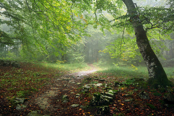 path in forest with rain and fog