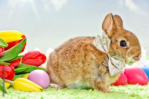 кролик с тюльпанами  № 1144579 бесплатно