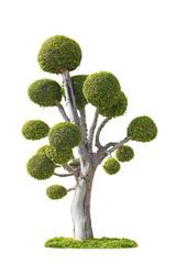 Tree isolated white background