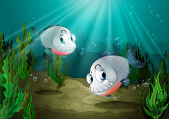 Two fishes with sharp teeth under the sea