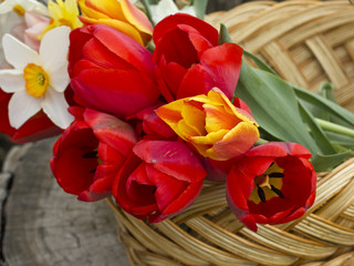 Fresh spring flowers  of tulips