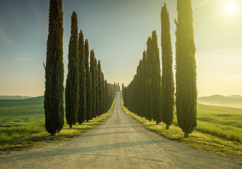 Foto op Canvas Toscane Tuscany, Landscape. Italy