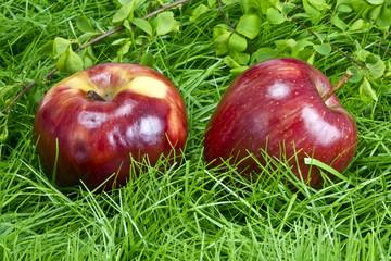 Fair Trade Apfel