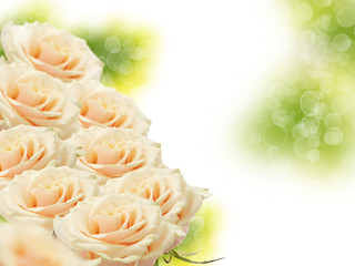 Floral background from roses