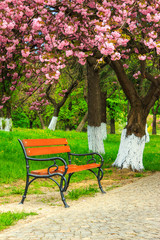 bench on the pavement in the park on a background of grass and s