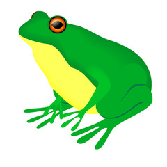green bullfrog on a white background
