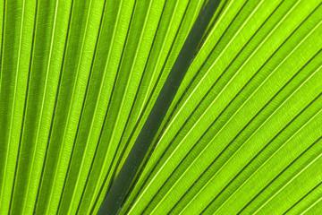 Palmenblatt grüner Hintergrund