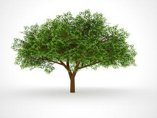 ISOLATED LEAFY TREE