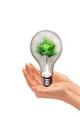 plant inside light bulb between