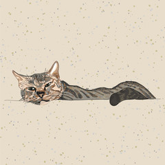 hand drawing cat on recycle paper