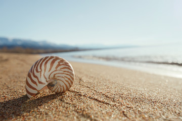 nautilus shell on the issyk-kul beach sand with mountains on bac