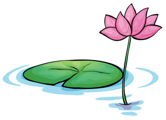 A waterlily flower