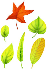 Six different leaves