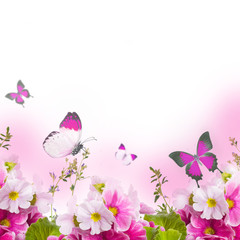 A spring primrose is in a bouquet,  butterfly