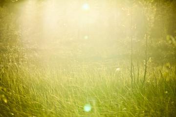 Meadow of Grass in Sunlight