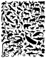 silhouette animals