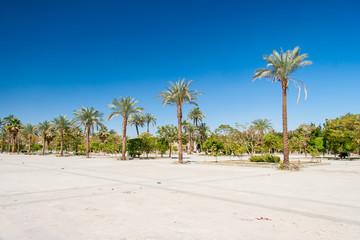 Green beautiful palms tree at blue sky
