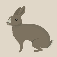 hare the forest long-eared