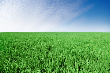 """"""" Green field on the background of the blue sky"""""""
