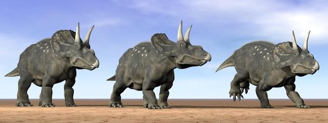 Diceratops dinosaurs in the desert - 3D render