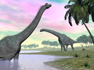 Printed kitchen splashbacks Purple Brachiosaurus dinosaurs in nature - 3D render