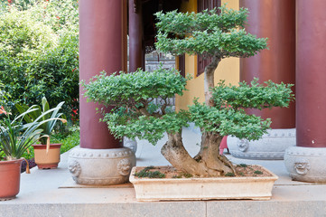 Garden of bonsai