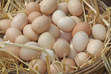 fresh eggs just laid on a bed of fluffy straw
