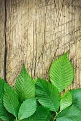 Green leaves over vintage wood