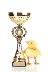 Duckling and champion cup isolated on white