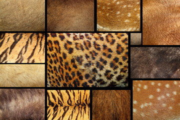 collection of textured - animal fur