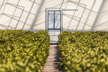 Entrance of a sunny greenhouse