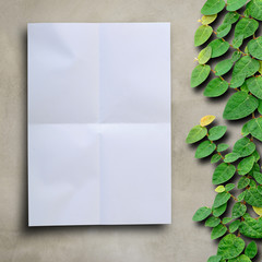 Blank white paper on cement wall with ivy fixing climbing tree b