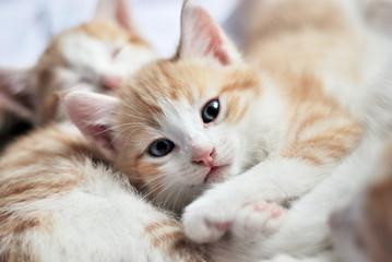 sweet kitty look at camera