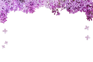 lush lilac flower half frame on white