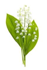 Fotorolgordijn Lelietje van dalen Lily-of-the-valley flowers on white