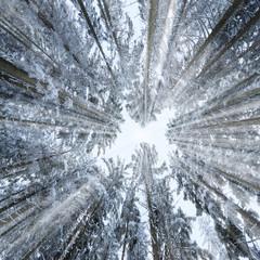 Fotobehang Aan het plafond winter forest