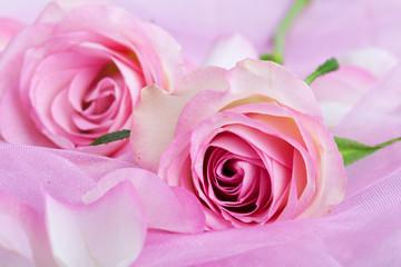 Rosenblüten in pink