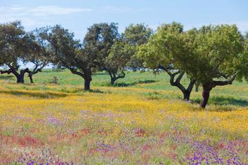 Portugal - Algarve - Landschaft