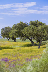 Portugal - Algarve - Landschaft