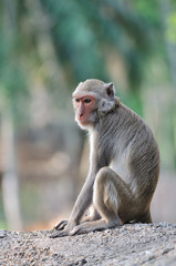 Lonely monkey.
