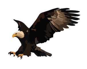 Vector illustration of the landing eagle isolated on white.