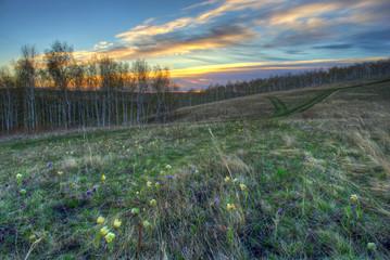 Wild flowers at dawn