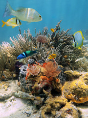 Underwater life in a coral reef with tropical fish and feather duster worms, Caribbean sea