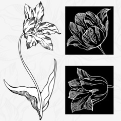Aluminium Prints Floral black and white White and black tulips.