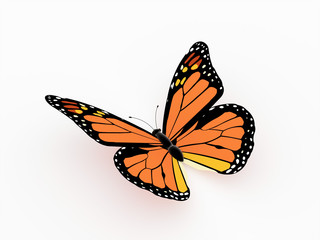 Butterfly orange isolated