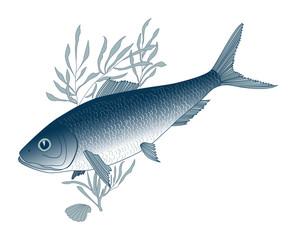 fish herring