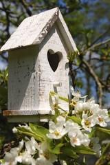 Obstblüte und Vogelhaus