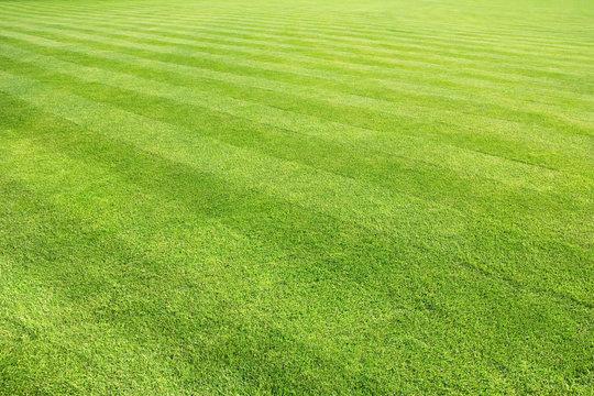 big lawn background